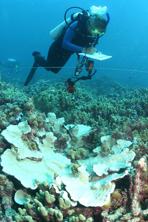 Researchers document corals along a trasect line.  Credit: James Watt