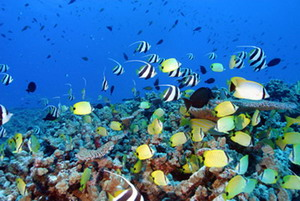 Coral reef at French Frigate Shoals - Credit: James Watt